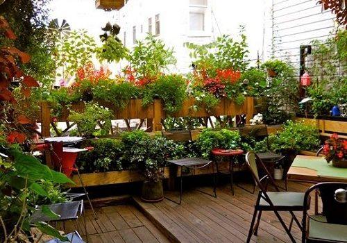 ý tưởng sân vườn