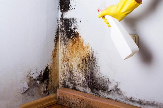 Sử dụng hóa chất tẩy rêu mốc cho tường